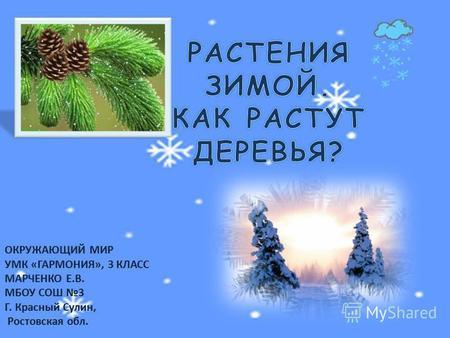 Растение в самой северной зоне картинки зимой