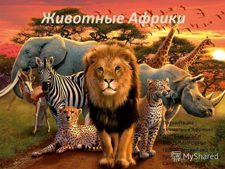 Презентация на тему Животные Африки класс Скачать бесплатно  Презентация к занятию по окружающему миру подготовительная группа на тему Презентация Животные Африки