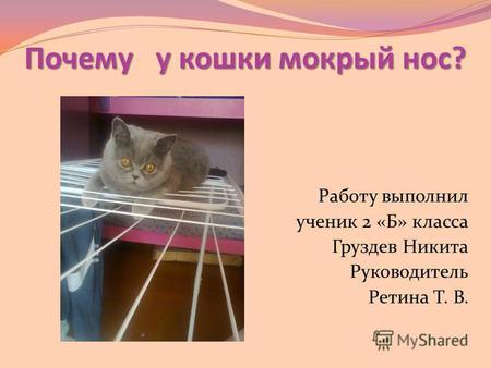 для своего если у кошки не влажный нос того