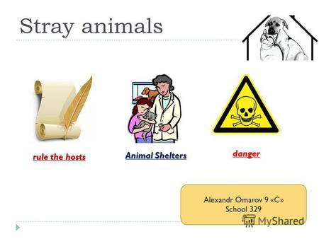 Stray animals rule the hosts Animal Shelters danger Alexandr Omarov 9 «C» School 329.
