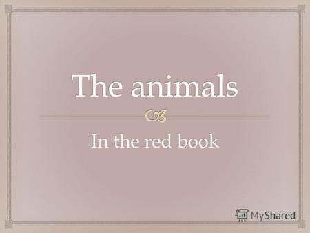 In the red book. The Amur tiger Lives in deciduous forest. Total number of 400-500 individuals.