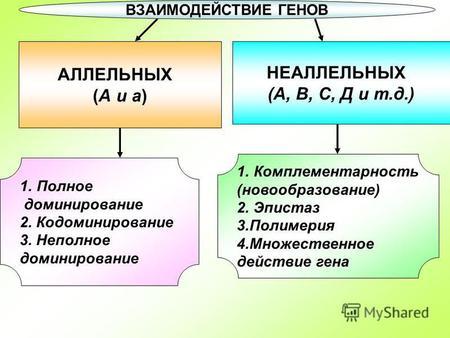 Реферат взаимодействие аллельных и неаллельных генов 6249