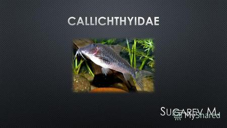 Within the family Callichthyidae, the two subfamilies have eight genera and about 177 species. They account for about 7% of all catfish. Most of these.