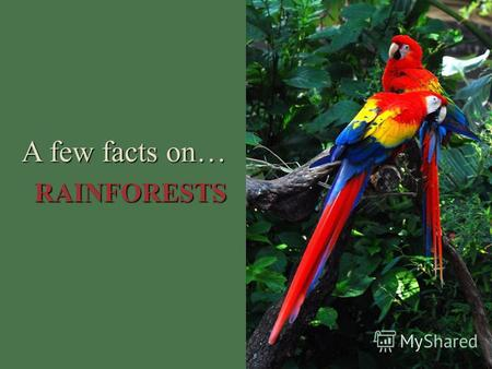 A few facts on… RAINFORESTS. Rainforests are forests that experience a high level of rainfall.