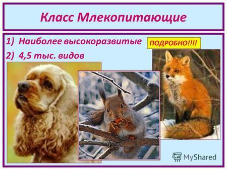 тест 36 класс млекопитающие или звери ответы