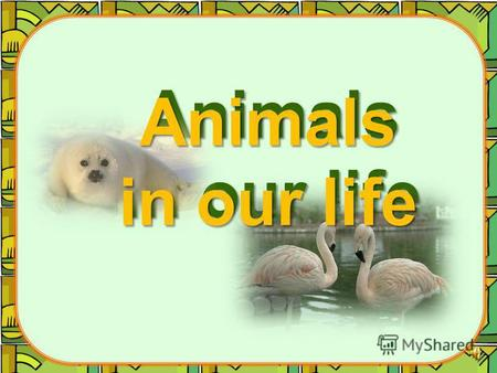 Animals in our life The stories about our pets The stories about our pets.