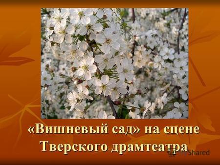 Книга Вишневый сад