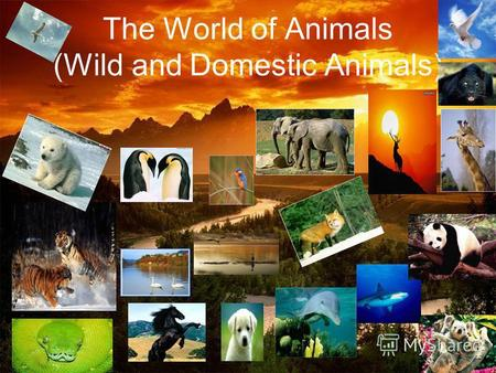 The World of Animals (Wild and Domestic Animals).