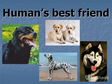 Humans best friend. Many people are fond of pets. They keep different animals and birds as pets. More often they are dogs, cats, hamsters, guinea-pigs,