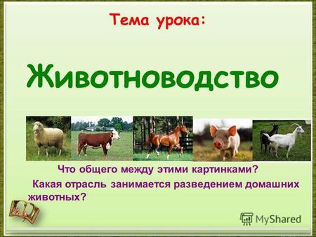 Презентация на тему Тема Животноводство в нашем крае  Тема урока Что общего между этими картинками Какая отрасль занимается разведением домашних животных