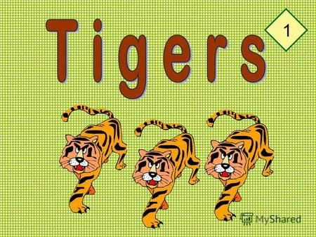 1 I like tigers. A tiger is a wild animal. 2 Tigers live in the forests in Asia. 3.