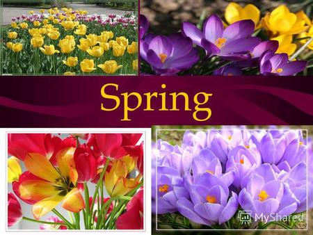 Spring Spring Month Birds Sun March Flowers Shine April Fine Sky May Fields Season Weather Come Soon Warm Green Sometimes It rains Trees.