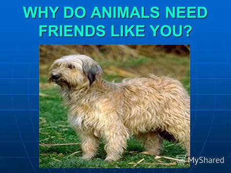WHY DO ANIMALS NEED FRIENDS LIKE YOU?. There are a lot of stray and injured animals all over the planet.