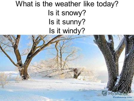 What is the weather like today? Is it snowy? Is it sunny? Is it windy?