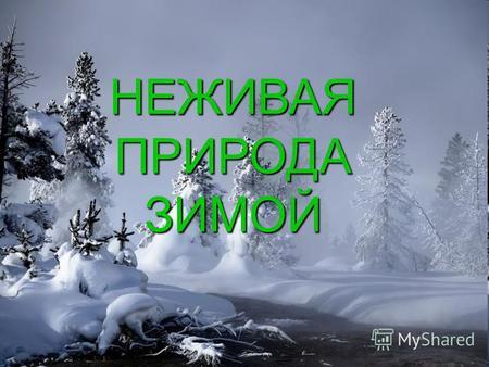 Зимние явления в живой природе картинки