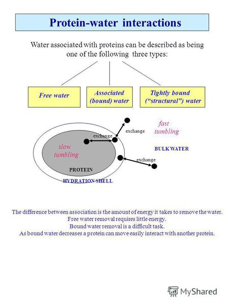Protein-water interactions Water associated with proteins can be described as being one of the following three types: Free water Associated (bound) water.