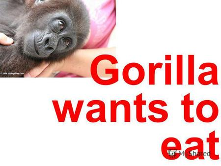 Gorilla wants to eat. Gorilla is going to a rhinoceros.