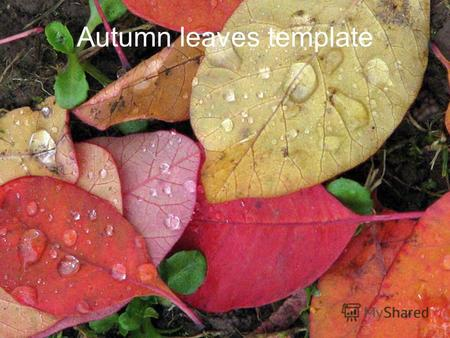 Autumn leaves template. Example bullet point slide Bullet point –Sub Bullet.