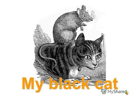 My black cat a cat a rat a black cat and a rat a white cat and a rat.
