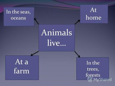 Animals live… In the seas, oceans At a farm At home In the trees, forests.