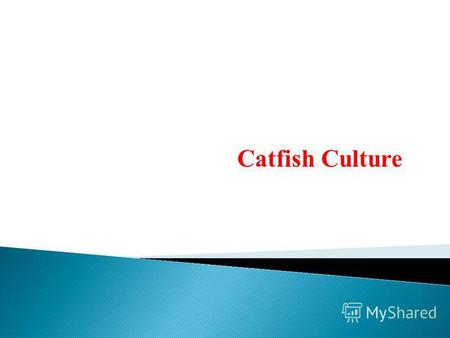 Catfish Culture. Ctafishes belong to Ictaluridae, Claridae, Pangasidae and Siluridae. Widely distributed in different parts of the world and their culture.