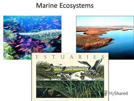 Marine Ecosystems. Marine ecosystems are among the largest of Earth's aquatic ecosystems. They include oceans, salt marshes, intertidal zones, estuaries,