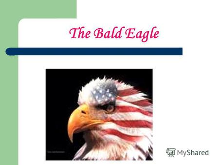 The Bald Eagle. On the backs of our gold coins, the silver dollar, the half dollar and the quarter, we see an eagle with outspread wings.