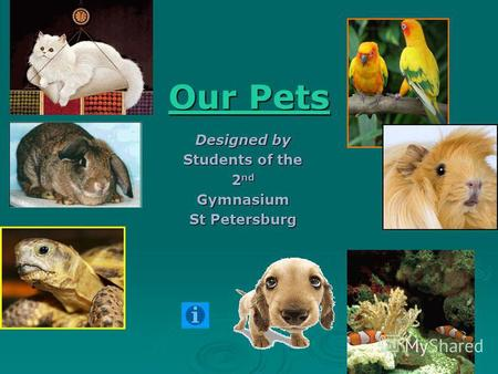 Our Pets Our Pets Designed by Students of the 2 nd Gymnasium St Petersburg.