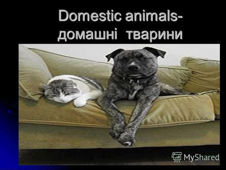Domestic animals- домашні тварини. A dog-собака A puppy-цуценя.