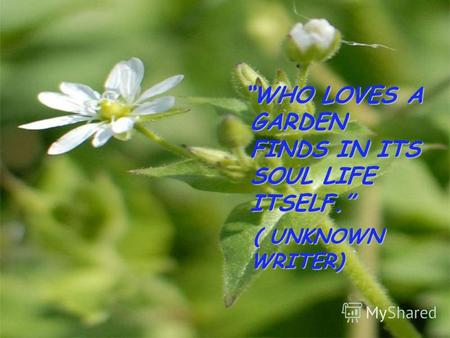 WHO LOVES A GARDEN FINDS IN ITS SOUL LIFE ITSELF. ( UNKNOWN WRITER) ( UNKNOWN WRITER)
