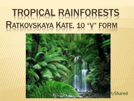 Tropical rainforests grow in the hot, humid places near the Equator. The plants and trees in the rainforest grow to different heights.