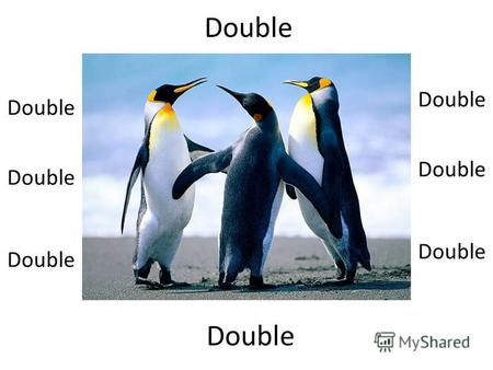 Double 40 double 80 double 160 double ??? Half Are we half penguins???