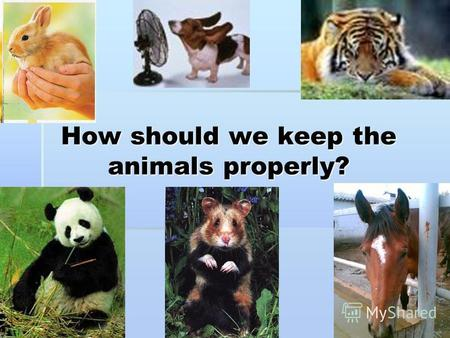 How should we keep the animals properly?. [әe][әe][әe][әe] a cat a cat.