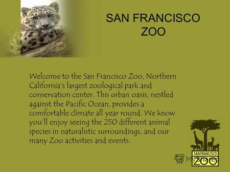 Welcome to the San Francisco Zoo, Northern California's largest zoological park and conservation center. This urban oasis, nestled against the Pacific.