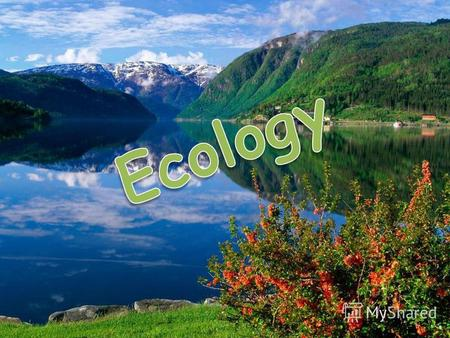 The aims of our lesson are: to repeat the words and expressions on the topic Ecology to work out ecological rules Rules for people in the forest to repeat.