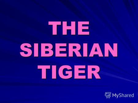 THE SIBERIAN TIGER. The Siberian tiger is also known as the Amour tiger, Manchurian tiger. It is written in the Red book.
