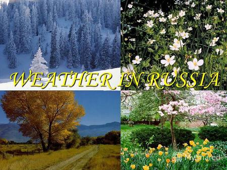 WEATHER IN RUSSIA. Everyone knows that there are four seasons in a year: spring, summer, autumn and winter.