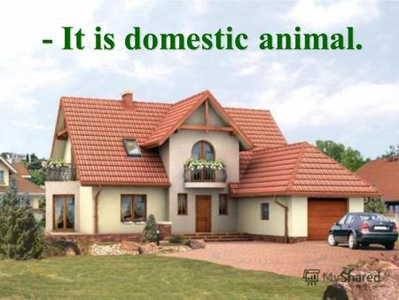 - It is domestic animal.. - It is little. - It is little.