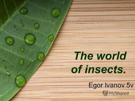 The world of insects. Egor Ivanov 5v. Flying insects Dragonfly Butterfly.