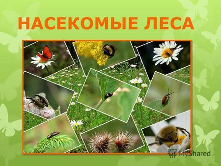 насекомые их знакомые скачать бесплатно