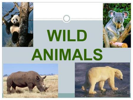 WILD ANIMALS kangaroo tiger lion bear polar bear.