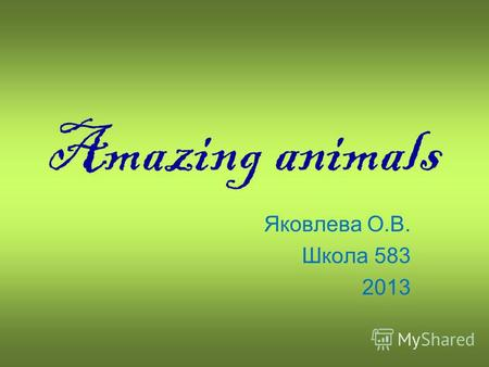 Amazing animals Яковлева О.В. Школа 583 2013. An elephant can hold 7 litres of water in its trunk. Its the only animal with four knees.