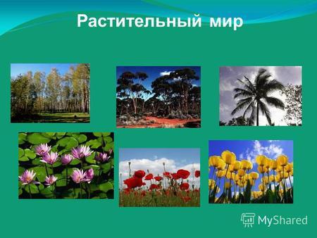 Презентацию на тему разнообразие растительного мира
