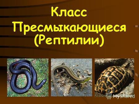 На тему презентацию класс рептилии 7