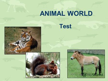 ANIMAL WORLD Test. Guess the animals god mekyno tac ogrf omuse owc ypon ipg sohre dog monkey cat frog mouse cow pony pig horse.