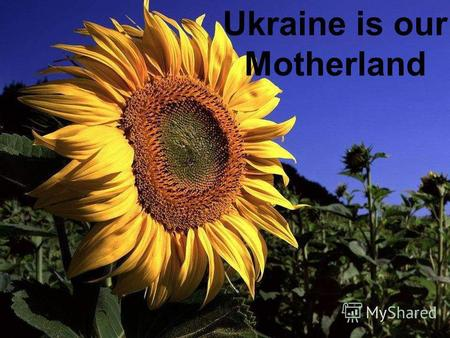 Ukraine Ukraine is our Motherland. Kyiv is the capital of Ukraine.It stands on the river Dnipro. More than 3 million people live in Kyiv.