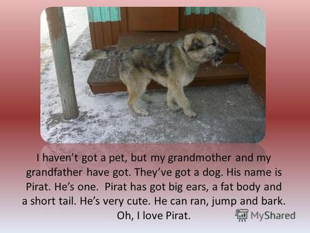 I havent got a pet, but my grandmother and my grandfather have got. Theyve got a dog. His name is Pirat. Hes one. Pirat has got big ears, a fat body and.