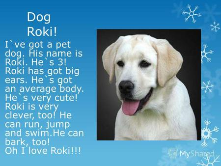 Dog Roki! I`ve got a pet dog. His name is Roki. He`s 3! Roki has got big ears. He`s got an average body. He`s very cute! Roki is very clever, too! He can.