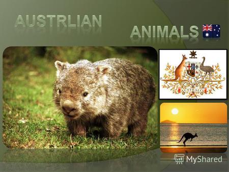 Some Australian animals are extremely unique and special but when you grow up here you don't realise that, of course. Growing up in the outback around.