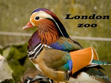 London zoo London Zoo is the world's oldest scientific zoo. It was opened in London on 27 April 1828.
